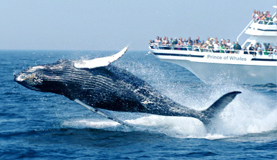 $28 - Whale-Watching Cruise in Prime Season, Reg. $48
