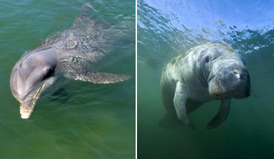 $27 - Dolphin & Manatee Sightseeing Cruise for 2, Reg. $56