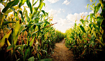 $12 - Eureka Corn Maze: 'Fantastic' Fall Activity for 2