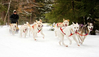 $149 - Dogsledding Adventure w/Alaskan Husky Racing Team