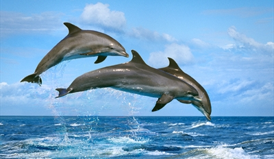 $33 -- Semi-Private Dolphin- & Bird-Watching Cruise
